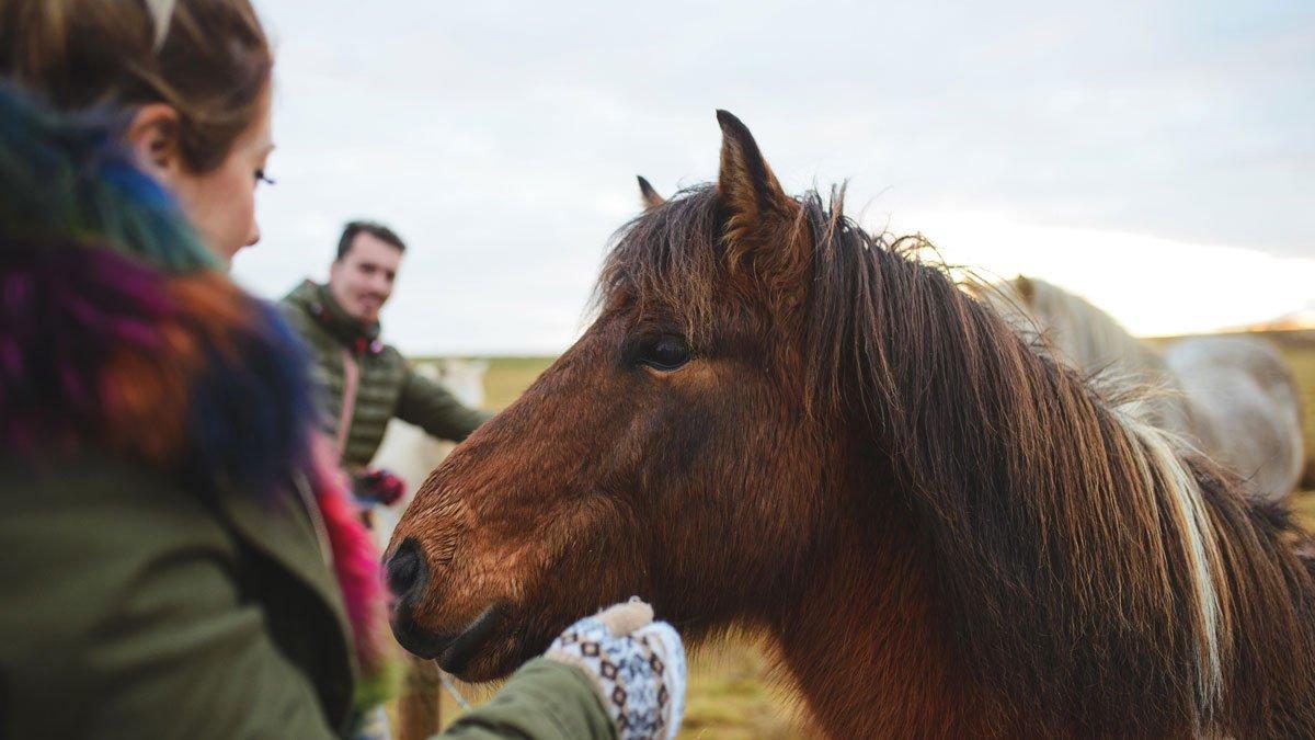 Pferde in der Natur mit Jugendlichen Personen im Vordergrund