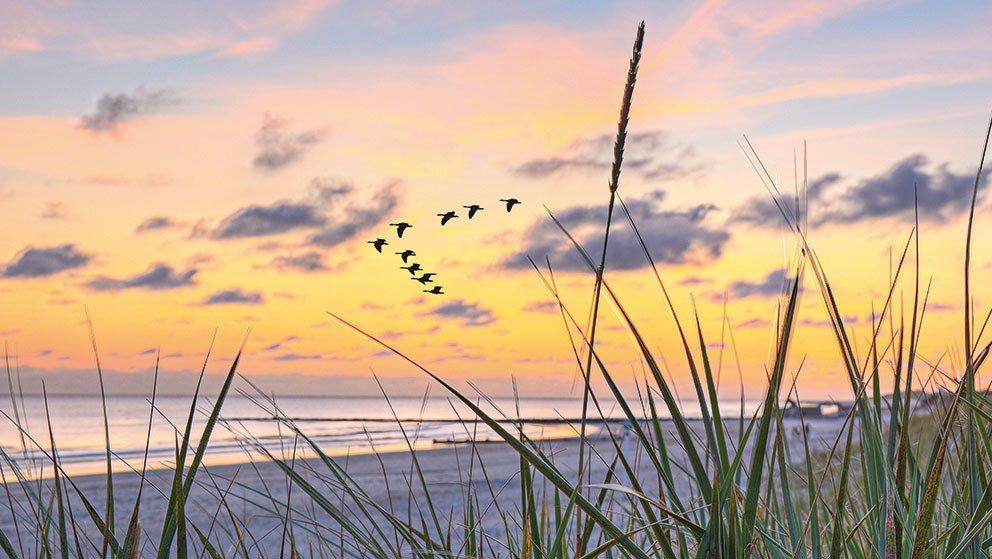 Vogelschwarm über der Ostsee