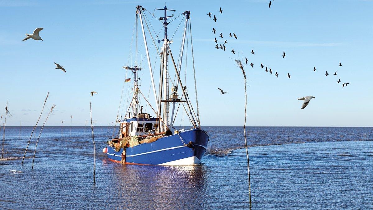 Boot mit Vögeln