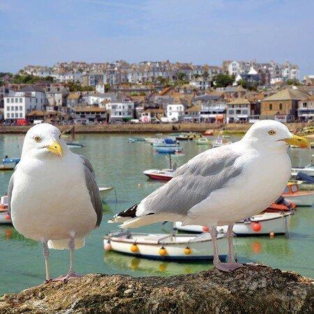 Alle Programmbausteine Cornwall auf einen Blick