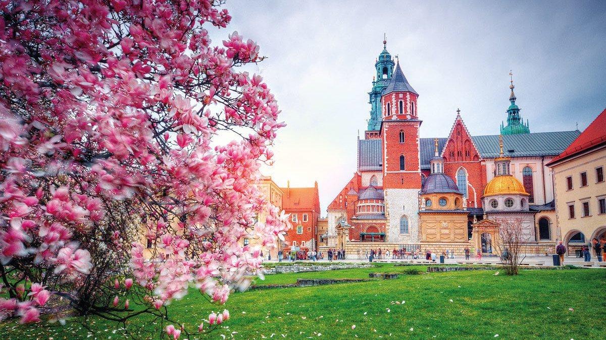Marienkirche in Krakau mit blühendem Strauß im Vordergrund