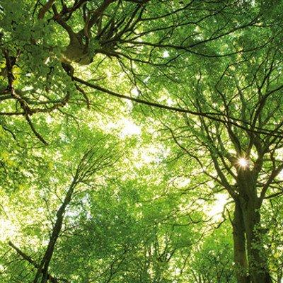 Walderlebnis-Fackelwanderung