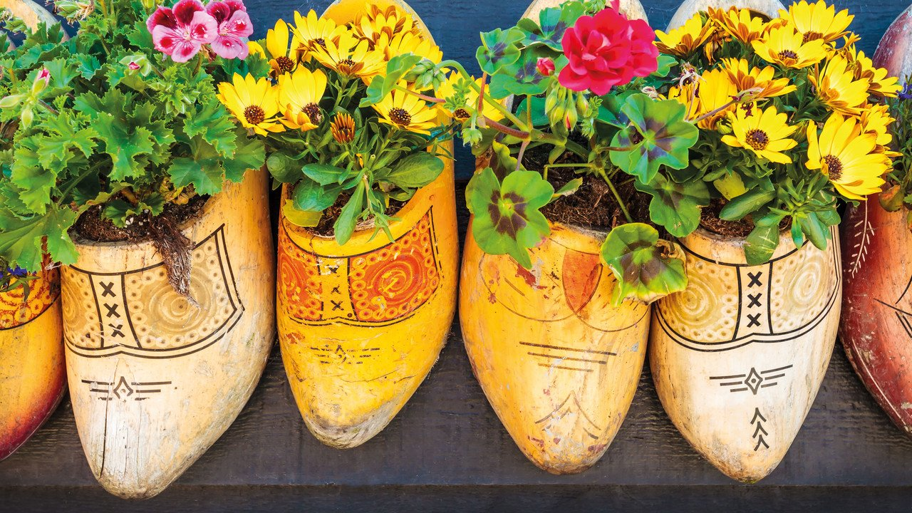Holzschuhe aus Holland mit Blumen bepflanzt