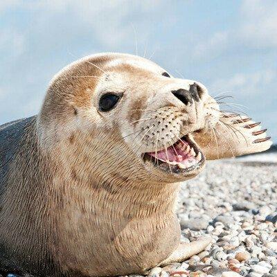 Strandwanderung zur Seehundbank