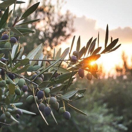 Olivenölmühle Melas Oil