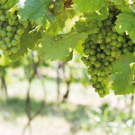 Führung Weinkulturpfad