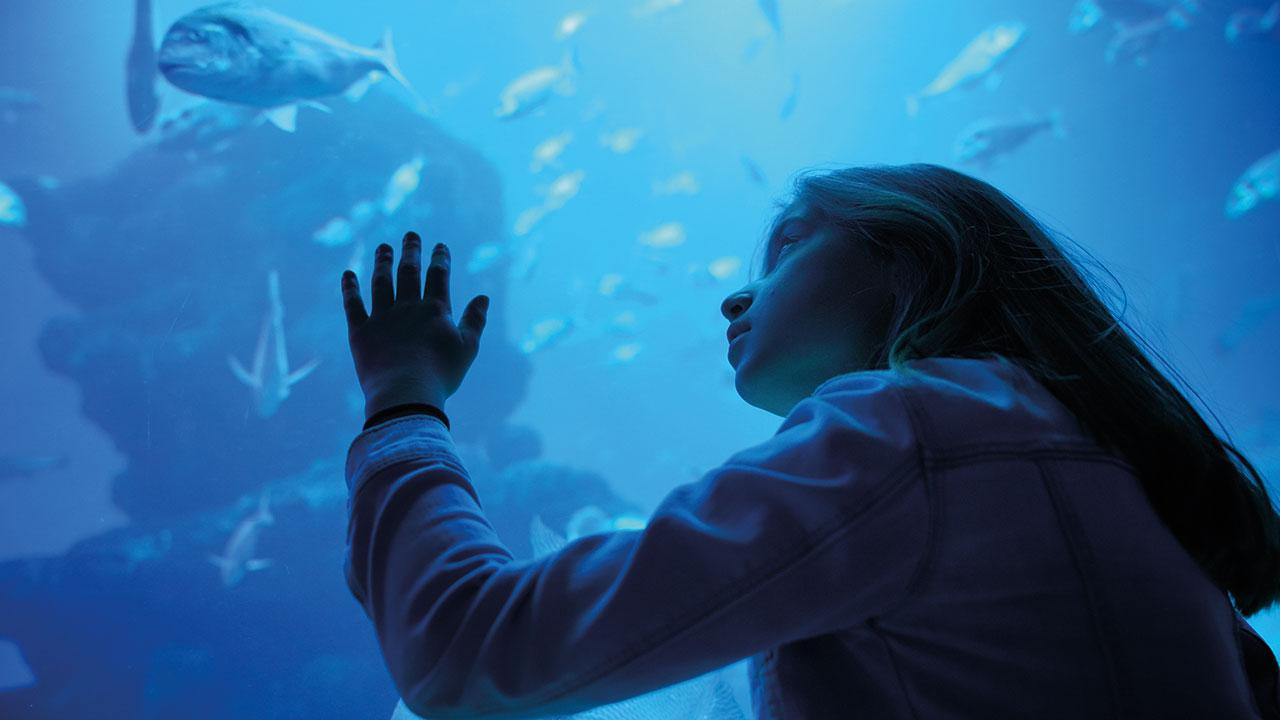 Kind schaut Fisch an
