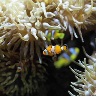 Aquarium Civico