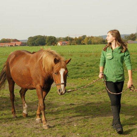 Workshop Pferdekunde