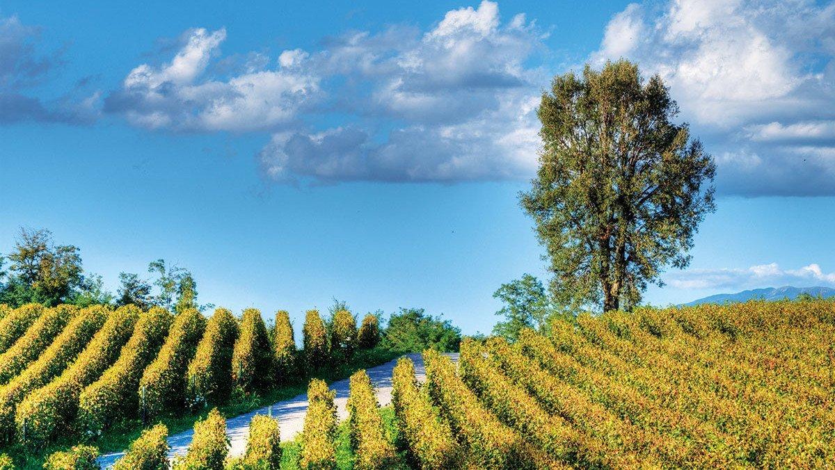 Blick auf die Naturlandschaft mit Weinbergen