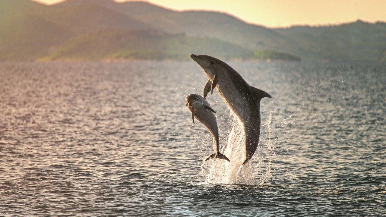 Delfine in der Adria
