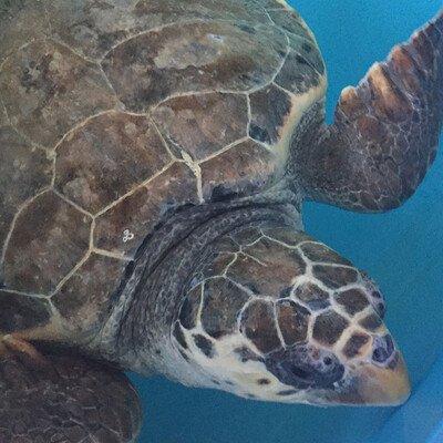 Besuch im Schildkröten-Krankenhaus