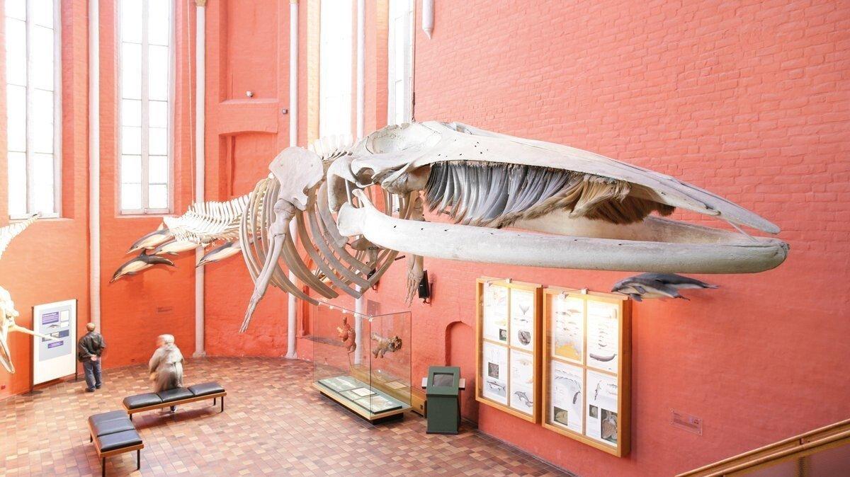 Museum in Stralsund
