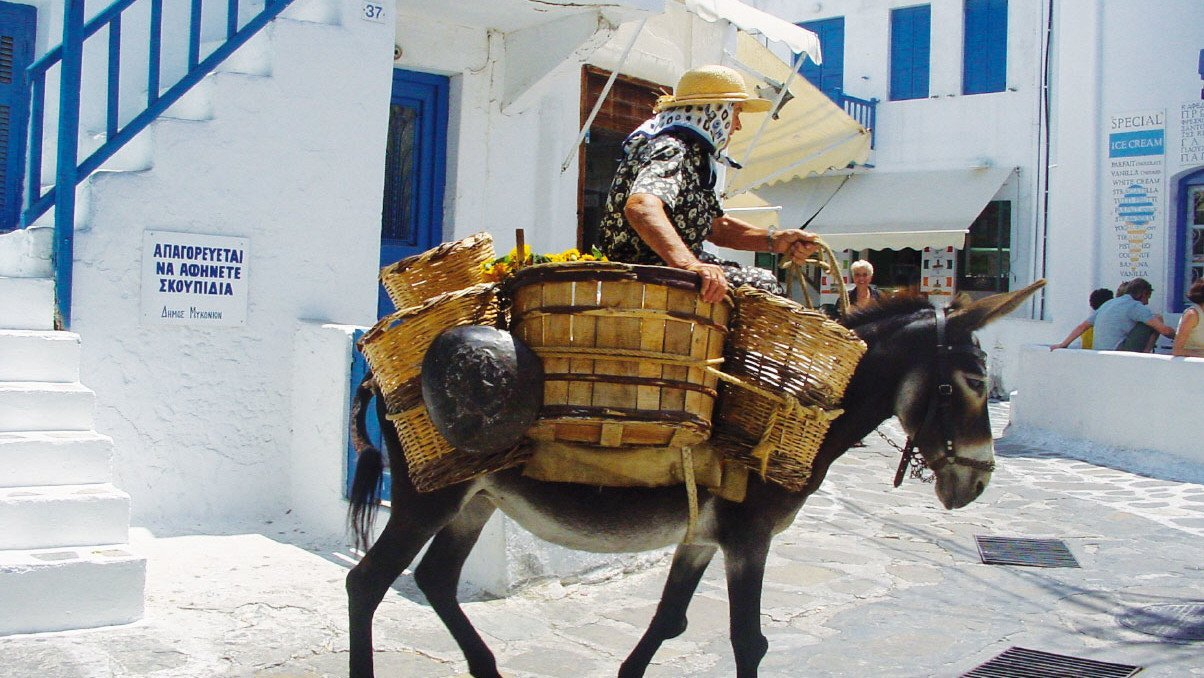 Esel in Griechenland