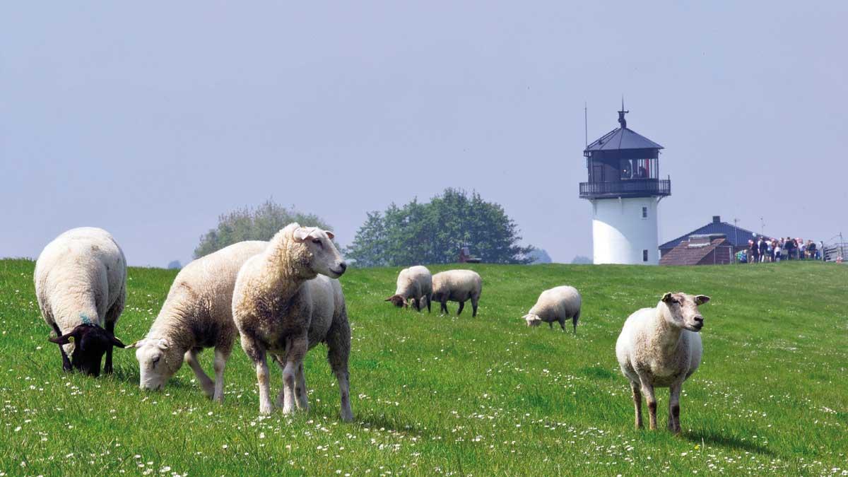 """Aussicht auf den Leuchtturm """"Dicke Berta"""" in Cuxhaven"""