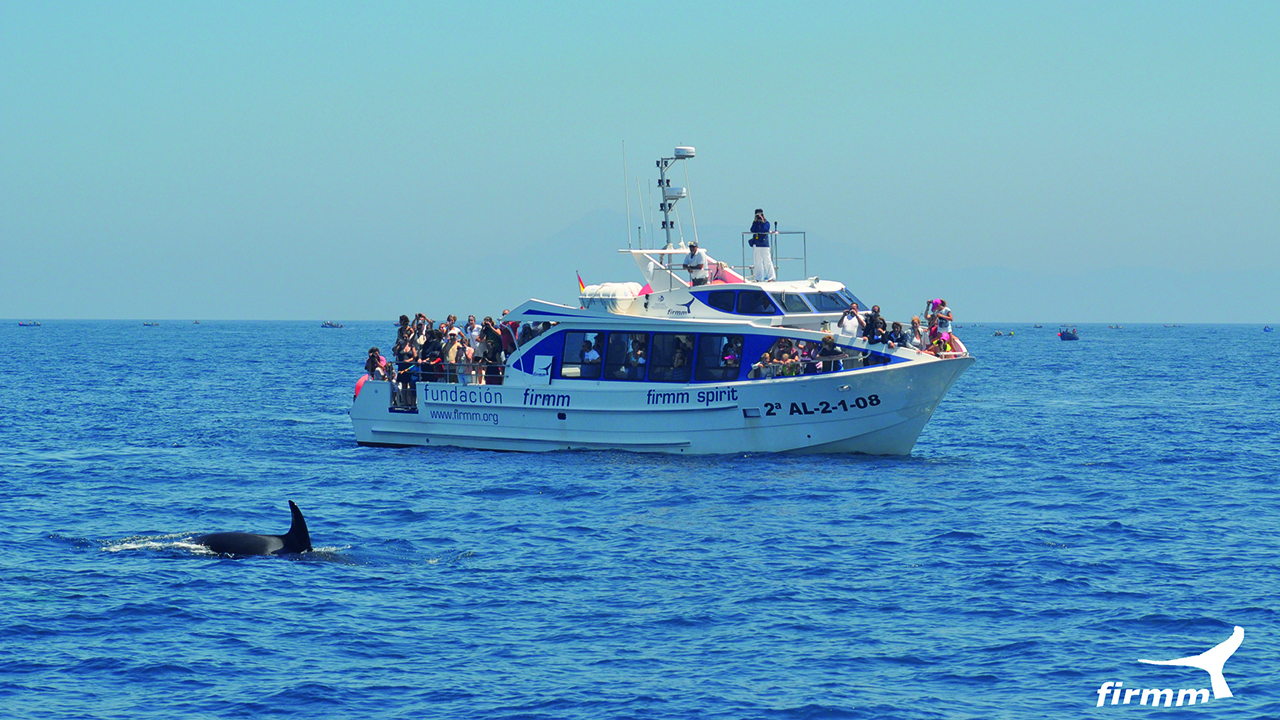 Boot beim whale watching