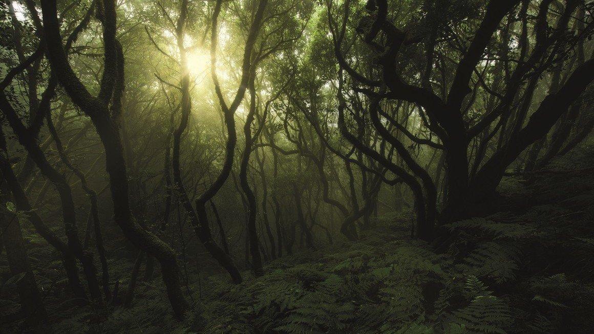 Anaga-Urwald auf Teneriffa