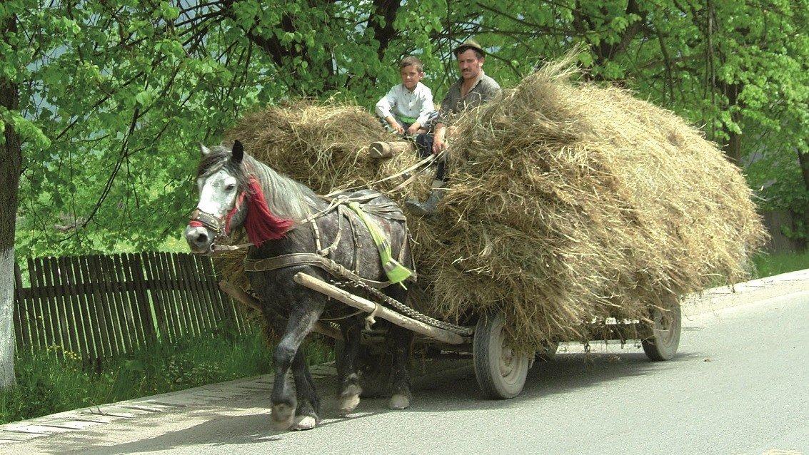 Panjewagen Rumänien