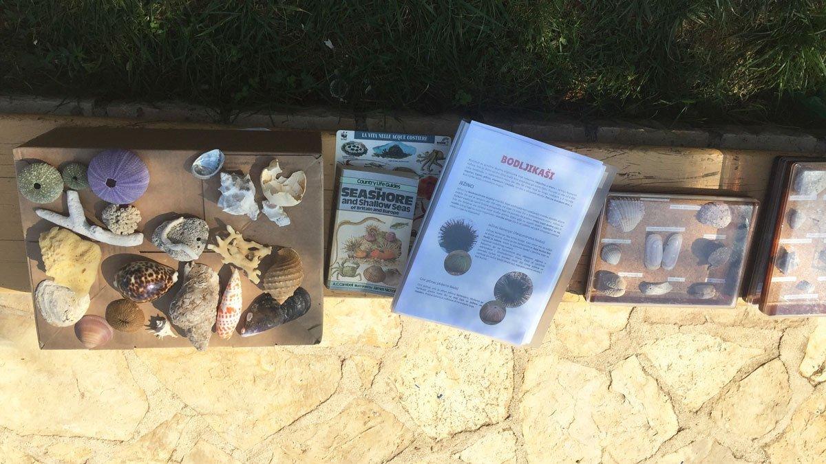 Muschelausstellung in Istrien